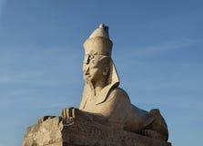 Sphinxe am Universitetskaya-Damm in St Petersburg, Russland Stockfotos