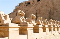 Sphinxes Stock Photos