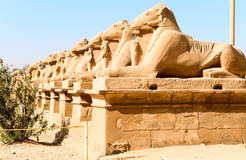 Sphinxes Royalty Free Stock Image