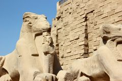 Sphinxes al tempiale di Karnak. Fotografie Stock