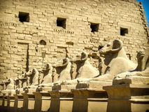 Sphinxes avenue at Karnak Temple (Luxor, Egypt). Sphinxes avenue detail at the entrance of the Karnak Templar complex (Luxor, Egypt Stock Image