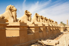 Sphinxes avenue. Luxor, Egypt Stock Image