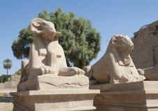 Sphinxes della ram al tempio di Karnak Immagine Stock Libera da Diritti