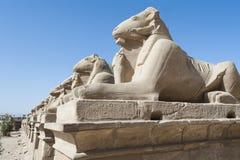 Sphinxes della ram al tempio di Karnak Fotografia Stock Libera da Diritti