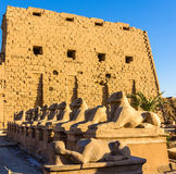 Sphinxes at the entrance of the Karnak Temple - Luxor Stock Photos