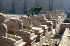 Sphinxes in Karnak, Egypt Royalty Free Stock Photo
