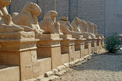 Sphinxes in Karnak, Egypt Royalty Free Stock Images