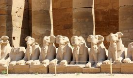 Sphinxes at the Karnak Temple. Stock Photo