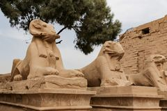 Sphinxes in Karnak Temple, Luxor, Egypt. Sphinxes in Karnak Temple, Luxor City, Egypt stock photo
