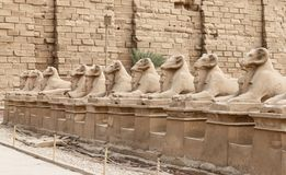Sphinxes in Karnak Temple, Luxor, Egypt. Sphinxes in Karnak Temple, Luxor City, Egypt royalty free stock photos