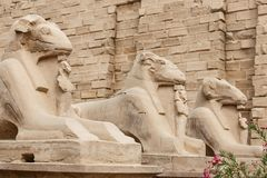 Sphinxes in Karnak Temple, Luxor, Egypt. Sphinxes in Karnak Temple, Luxor City, Egypt royalty free stock photo