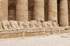Sphinxes in Karnak Temple, Luxor, Egypt. Sphinxes in Karnak Temple, Luxor City, Egypt stock photography