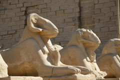 Sphinxes - Luxor Stock Photos