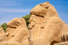 Sphinxes. Luxor, Egypt Royalty Free Stock Images