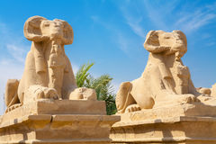 Sphinxes. Luxor, Egypt Stock Photography