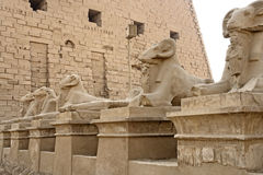 Sphinxes at Precinct of Amun-Re Stock Photography