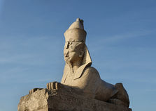 Sphinxes at the Universitetskaya Embankment in Saint Petersburg, Russia Stock Photos