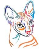 Sphynx猫传染媒介例证五颜六色的装饰画象  库存例证