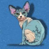 Sphynx猫例证 图库摄影