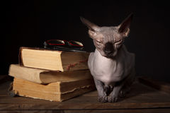 Sphynx cat and books Stock Photos
