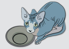 Sphynx cat with a bowl Stock Image