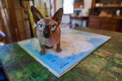 Sphynx cat explores antarctica royalty free stock photo