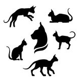 Sphynx cat icons and silhouettes. Stock Photos