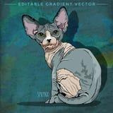 Sphynx Cat Illustration vector illustration