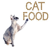 Sphynx cat and the inscription of the feed 'cat food' Royalty Free Stock Photography