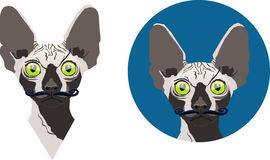 The Sphynx cat with the moustaches Royalty Free Stock Photography