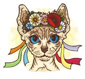 Sphynx cat in the Ukrainian national wreath Stock Photos