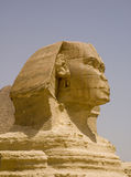 Sphynx egypt close up. The historic and famous Sphynx in egypt Royalty Free Stock Images