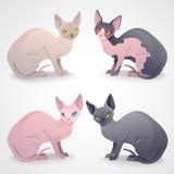 Sphynx katter Royaltyfri Bild
