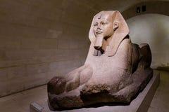 Sphynx på Louvremuseet Royaltyfri Bild