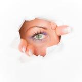 Spia dell'occhio curiosa Fotografia Stock Libera da Diritti