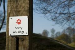 Spiacente nessun cani Immagine Stock