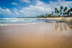 Spiagge del Brasile - Oporto de Galinhas fotografia stock
