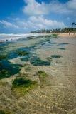 Spiagge del Brasile - Oporto de Galinhas fotografie stock