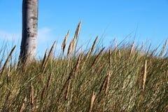 Spiaggia ad ovest Prerow della psamma arenaria fotografie stock