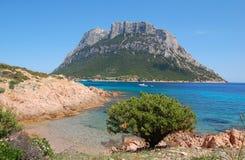 Spiaggia, albero ed isola Fotografia Stock Libera da Diritti