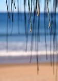 Spiaggia in Australia Immagini Stock