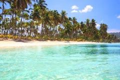 Spiaggia bianca caraibica della palma della sabbia Immagini Stock Libere da Diritti