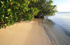 Spiaggia bianca pura Fotografia Stock