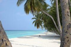 Spiaggia blu di paradiso con i palmtrees Immagini Stock