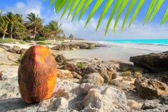 Spiaggia caraibica del turchese della noce di cocco di Tulum Messico Fotografia Stock Libera da Diritti