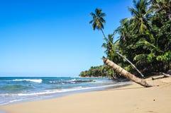 Spiaggia caraibica della giungla perfetta a Costa Rica. Immagini Stock Libere da Diritti