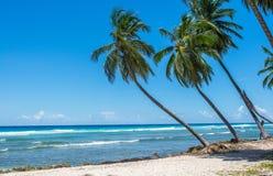 Spiaggia caraibica delle palme Fotografia Stock Libera da Diritti