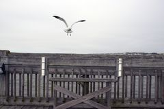 Spiaggia Carolina del Sud, il 17 febbraio 2018 - banco vuoto di follia sul pilastro di pesca con due supporti di canna da pesca e fotografia stock libera da diritti