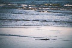 Spiaggia comoda del Mar Baltico con le rocce e il vegetat verde immagini stock libere da diritti