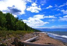Spiaggia con driftwood   Immagini Stock Libere da Diritti